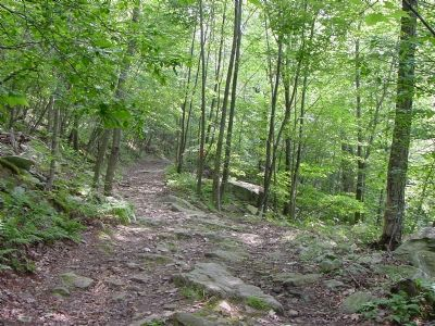 Second Fork in the Trail image. Click for full size.