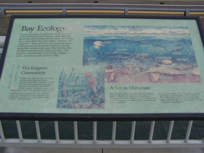 Information Marker 3 Photo, Click for full size