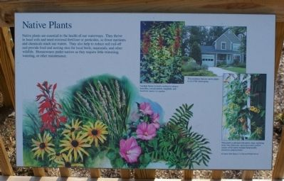 Native Plants Marker Photo, Click for full size