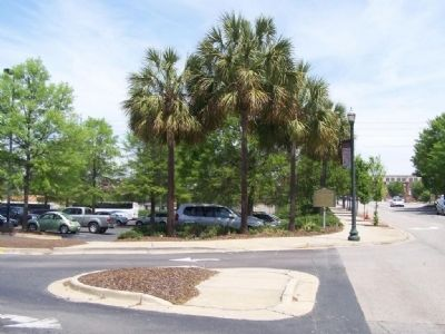 Doolittle Raiders Marker with Palmetto trees, as Mentioned on Marker Photo, Click for full size