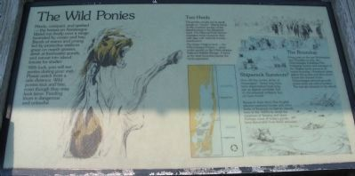 The Wild Ponies Marker Photo, Click for full size