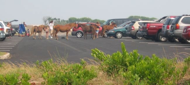 Ponies in the Parking Lot Photo, Click for full size