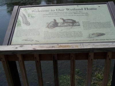 Welcome to Our Wetland Home Marker image. Click for full size.