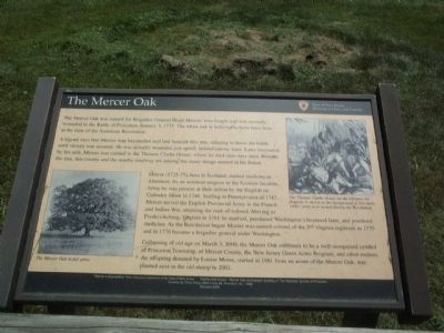 The Mercer Oak Marker image. Click for full size.