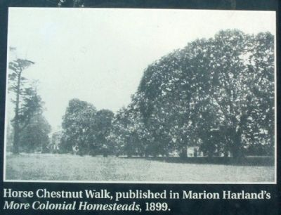 Horse Chestnut Walk, image. Click for full size.