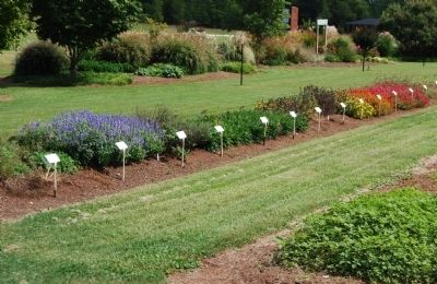 Row of Annuals at Park Seed image. Click for full size.