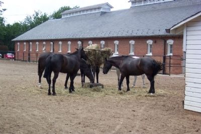 Horses at McKinney Memorial Stables image. Click for full size.