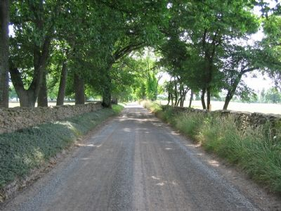 Country Lane in Battle Area Photo, Click for full size