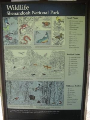 Park Wildlife Information image. Click for full size.