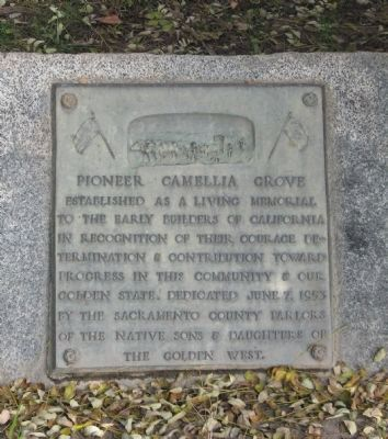 Pioneer Camellia Grove Marker image. Click for full size.