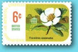 Franklinia Altamaha Honored with a postage stamp image. Click for full size.