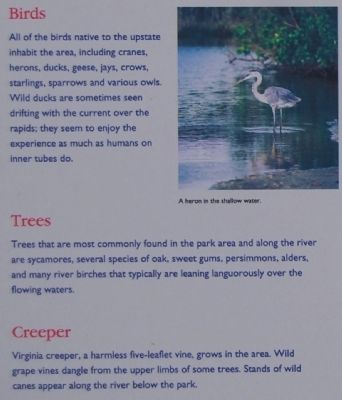 Irvin Pitts Park Marker - Birds, Trees, and Creeper image. Click for full size.