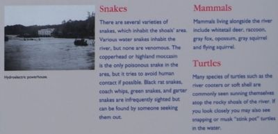 Irvin Pitts Park Marker - Snakes, Mammals, and Turtles Photo, Click for full size