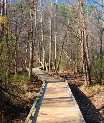 Lake Conestee Nature Park -<br>One of Several Boardwalks in the Park Photo, Click for full size