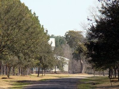 Plantation House Can be Glimpsed at the End of the Lane Photo, Click for full size