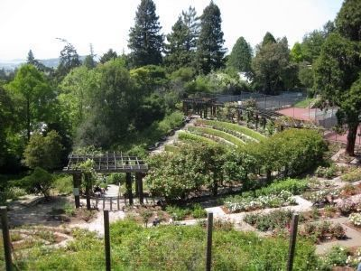 Berkeley Rose Garden - Exterior from the Southeast image. Click for full size.
