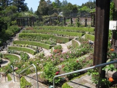 Berkeley Rose Garden - Interior from the Southeast image. Click for full size.