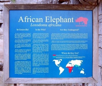African Elephant Marker Photo, Click for full size