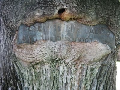 Sign Embedded in Tree Behind Marker image. Click for full size.