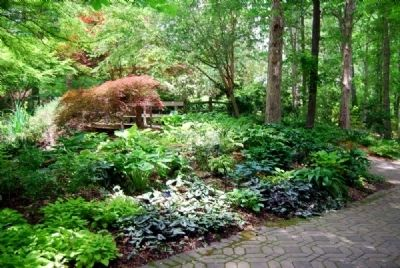 The Charles and Betty Cruickshank Hosta Garden image. Click for full size.