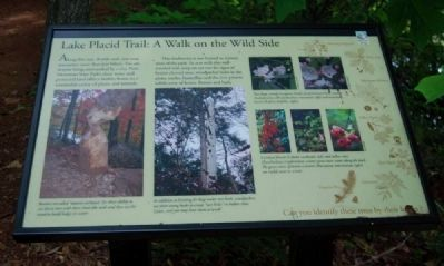 Lake Placid Trail: A Walk on the Wild Side Marker<br>5th marker in the Park&#39;s Wayside Marker&#39;s Trail image. Click for full size.