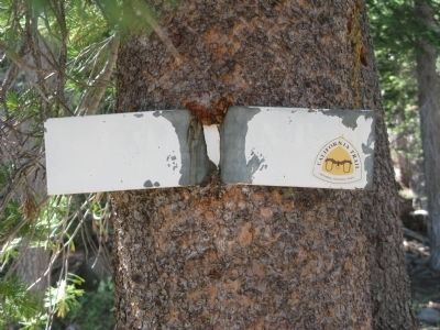 California National Historic Trail Marker Embedded in Tree image. Click for full size.
