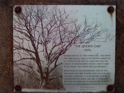 The Linden Oak Marker image. Click for full size.