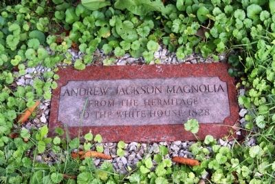 Stone Marker by Jackson Magnolia Tree image. Click for full size.