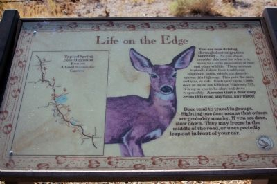 """Life on the Edge"" Deer Marker image. Click for full size."