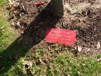 "Plaque - - "" Cindy's Tree "" Photo, Click for full size"
