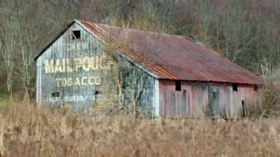 Mail Pouch Ad on Barn image. Click for full size.