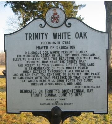Trinity White Oak Marker image. Click for full size.