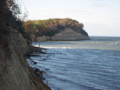 Calvert Cliffs image. Click for full size.