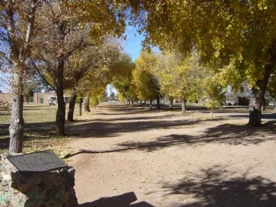 Cottonwood Lane at Fort Lowell Photo, Click for full size