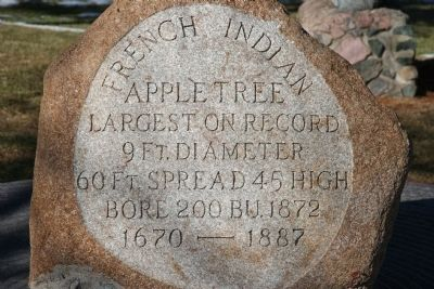 French Indian Apple Tree Marker image. Click for full size.