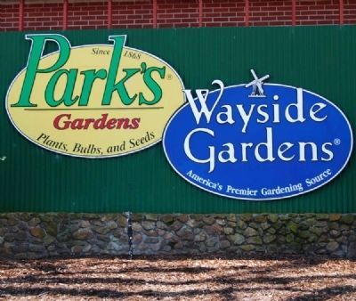 Park�s Seed / Wayside Gardens image. Click for full size.