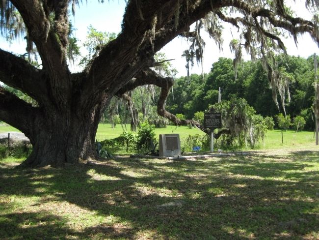 "The Volusia Marker under the ""Volusia Oak"" image. Click for full size."