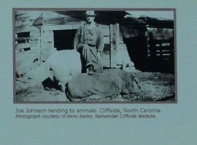 Joe Johnson tending to animals. Cliffside, North Carolina. image. Click for full size.