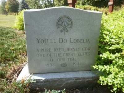 You'll Do Lobelia Marker Photo, Click for full size