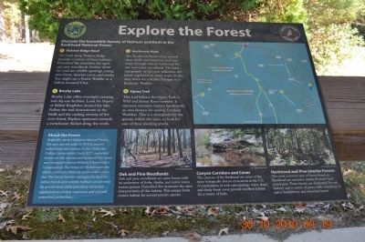 Explore the Forest~ You are here image. Click for full size.
