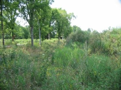 Grasses Growing in the Ditch and on the Earthworks image. Click for full size.