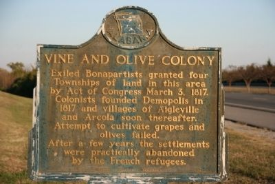 Vine And Olive Colony Marker Photo, Click for full size