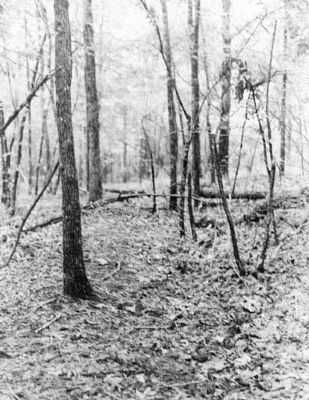 Trench at Site Photo, Click for full size