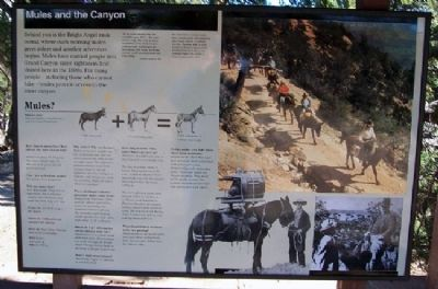 Mules and the Canyon Marker image. Click for full size.