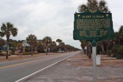 Plant - a - Palm Marker, along tree lined Palm Blvd, looking northeast image. Click for full size.