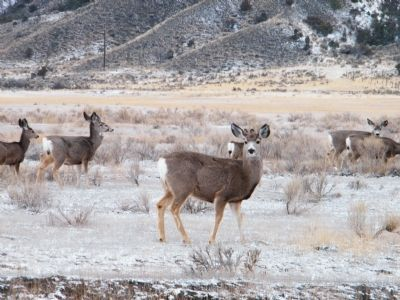 Small herd of mule deer near entrance to park image. Click for full size.