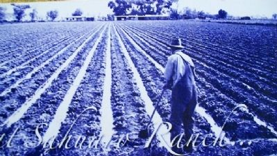 Photo on Irrigation Marker Photo, Click for full size