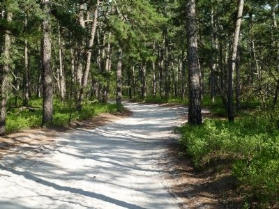 Quaker Bridge road winding through the Pine Barrens. image. Click for full size.