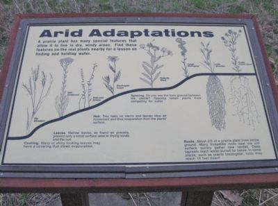 Arid Adaptations image. Click for full size.
