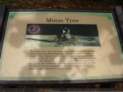 Moon Tree Marker image. Click for full size.